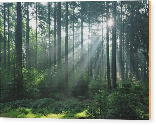 Fairytale Forest - Sunbeams In Natural Wood Print by Avtg