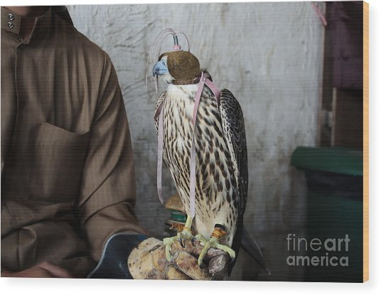 Falconer With His Falcon, Used For Wood Print