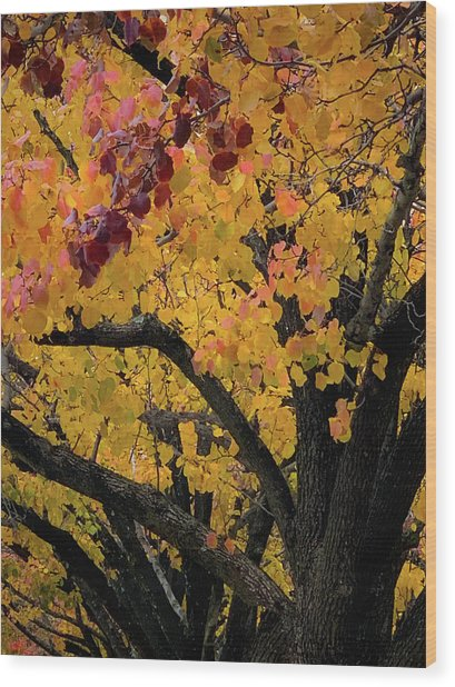 Fall In Carlyle Wood Print