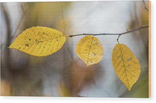 Wood Print featuring the photograph Fall In Triplicate by Michael Arend
