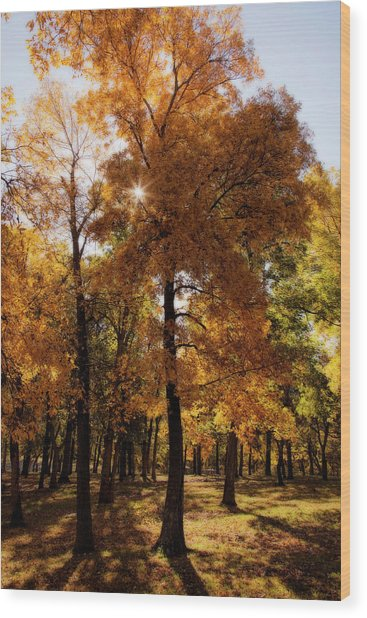 Wood Print featuring the photograph Fall Sunshine by Scott Bean