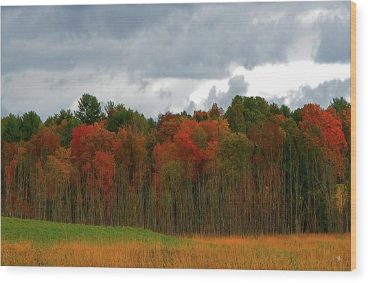 Fall Trees Off Rte 23a Wood Print