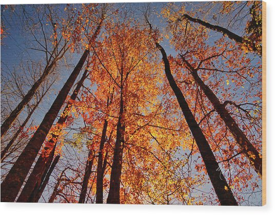 Fall Trees Sky Wood Print