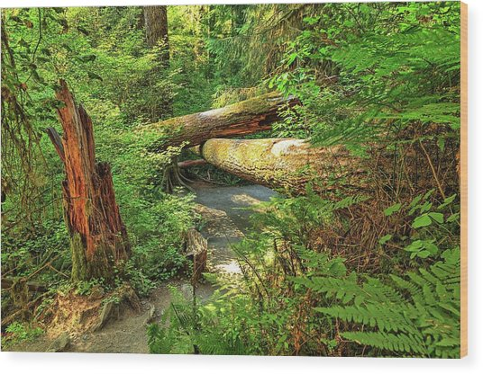 Fallen Trees In The Hoh Rain Forest Wood Print