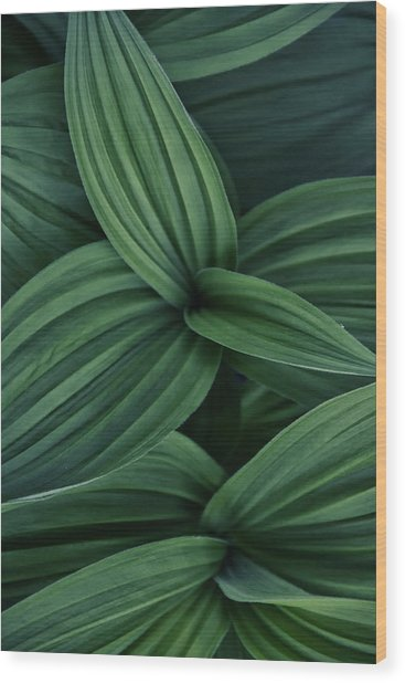 Wood Print featuring the photograph False Hellebore Plant Abstract by Nathan Bush