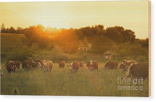 Farmland Summer Scene In Sunset Wood Print
