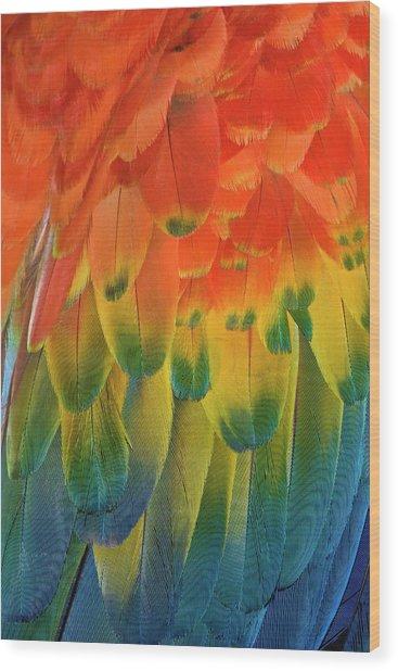 Feather Pattern, Scarlet Macaw Wood Print by Adam Jones