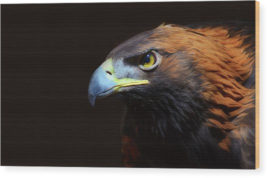 Female Golden Eagle Wood Print