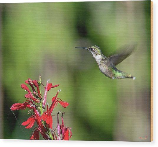 Female Ruby-throated Hummingbird Dsb0320 Wood Print