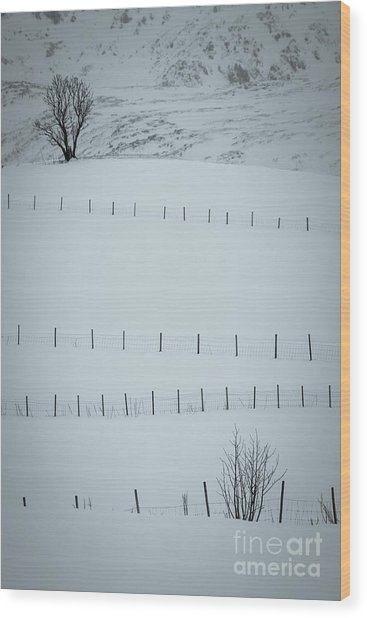 Fences And Trees Wood Print