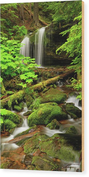 Fern Falls Panoramic Wood Print