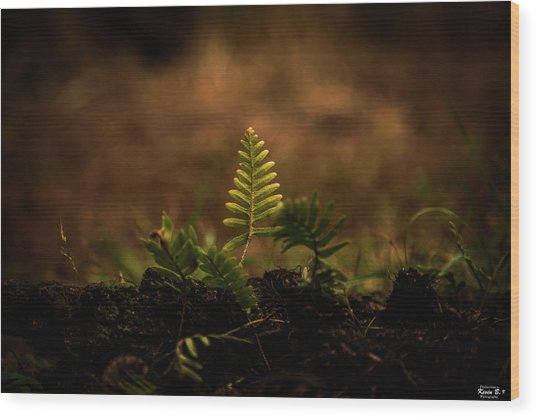 Fern Of Life Wood Print