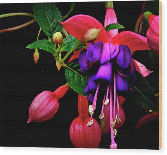 Festive Fuschia Wood Print