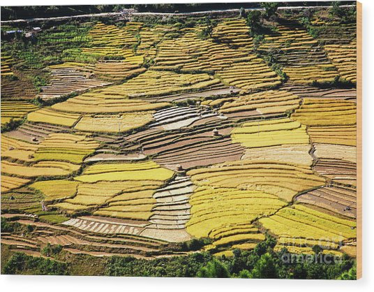 Wood Print featuring the photograph Fields Of Rice by Scott Kemper