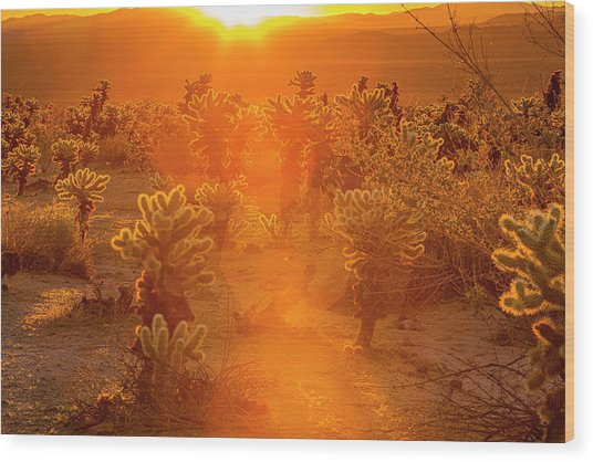 Fiery Sunrise Among The Cacti Wood Print