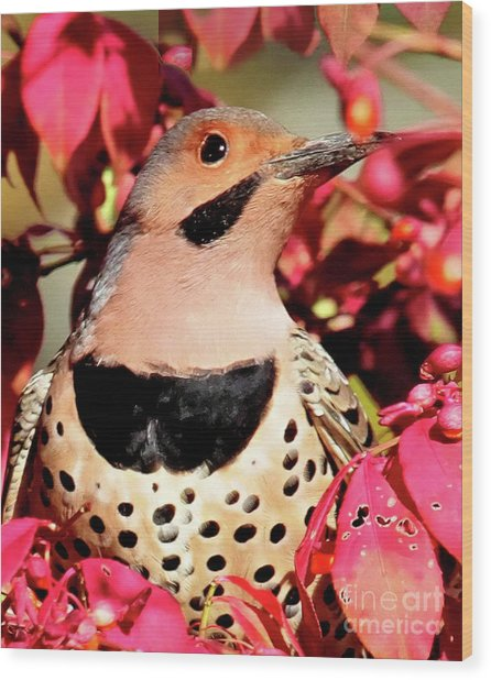 Fire Bush Flicker Wood Print