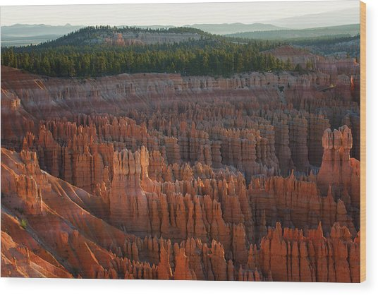 First Light On The Hoodoo Inspiration Point Bryce Canyon National Park Wood Print