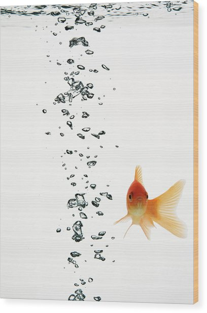 Fish Swimming With Bubbles Water Wood Print