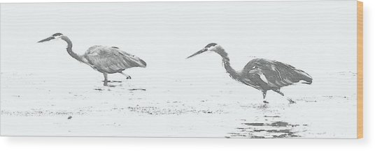 Fishing Blue Herons Wood Print