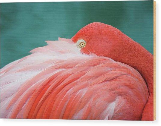 Flamingo At Rest Wood Print