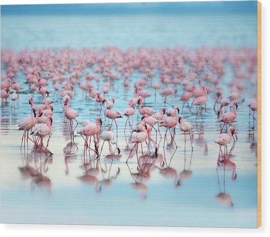 Flamingoes Wood Print by Grant Faint