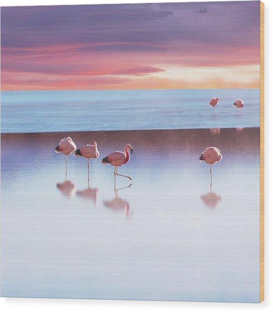 Flamingoes In Bolivia Wood Print by Ingram Publishing