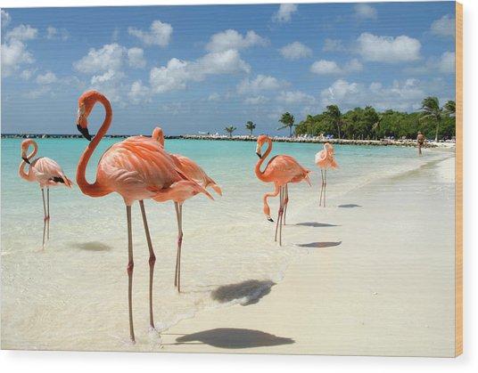 Flamingos On The Beach Wood Print by Vanwyckexpress