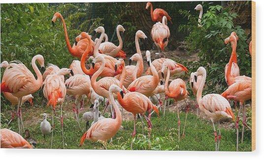Flamingos Outdoors Wood Print