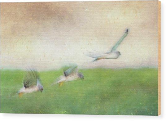 Flight Of The Harrier Wood Print