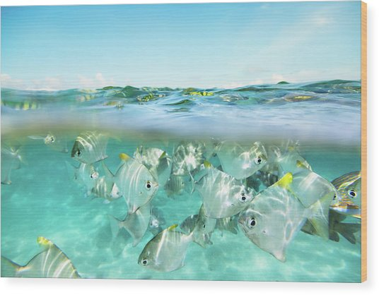 Flock Of Fish Under And Above Water Wood Print by Danilovi