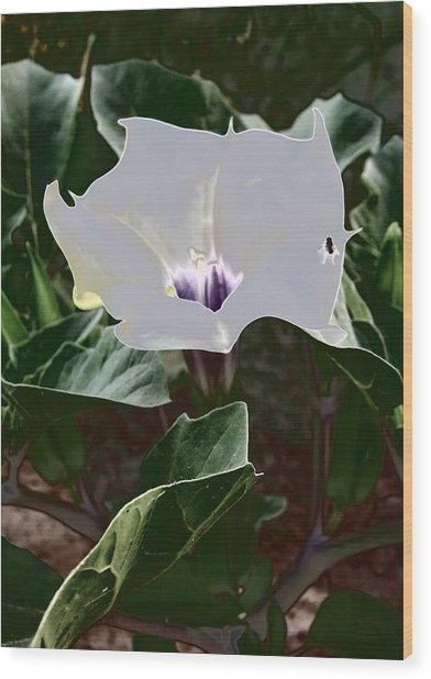 Wood Print featuring the photograph Flower And Fly by Judy Kennedy