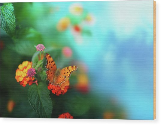 Flower Background With Butterfly Wood Print by O-che