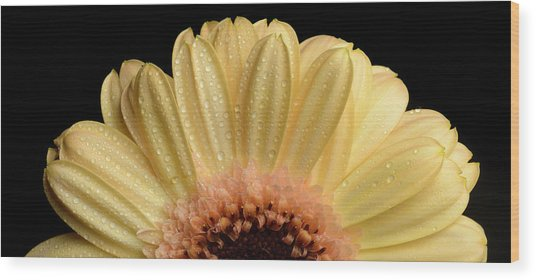 Wood Print featuring the photograph Flower by Mirko Chessari
