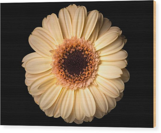 Wood Print featuring the photograph Flower Over Black by Mirko Chessari