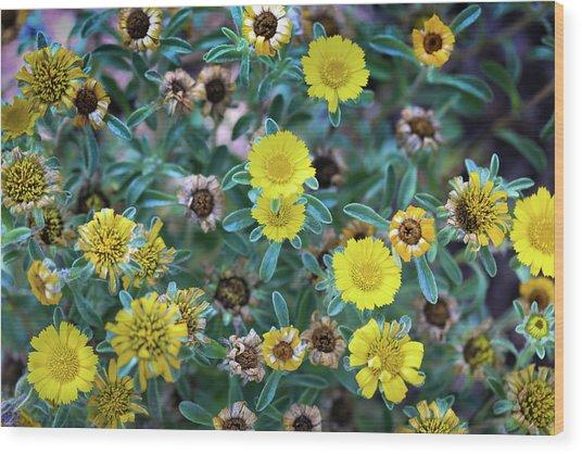 Flower Patterns Collection Set 01 Wood Print