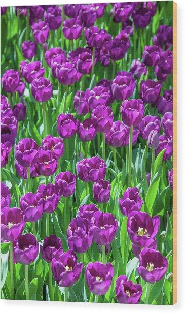 Flower Patterns Collection Set 02 Wood Print