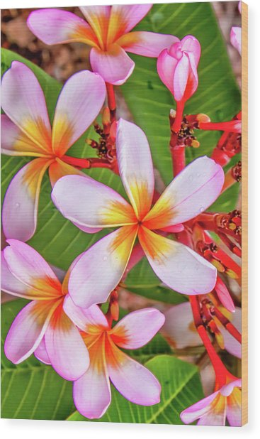 Flower Patterns Collection Set 06 Wood Print