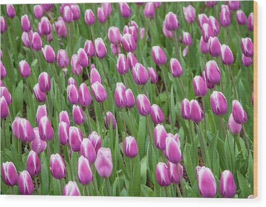 Flower Patterns Collection Set 07 Wood Print by Az Jackson