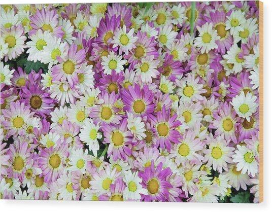Flower Patterns Collection Set 10 Wood Print