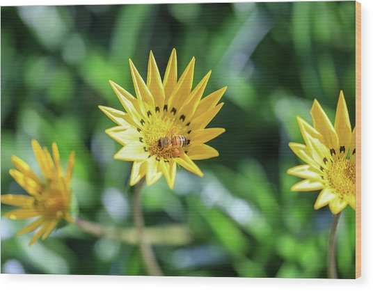 Yellow Flowers And A Bee Wood Print