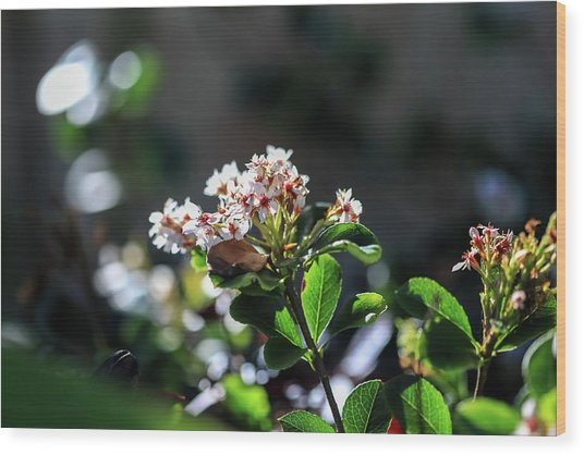 Beautiful Blooms Wood Print