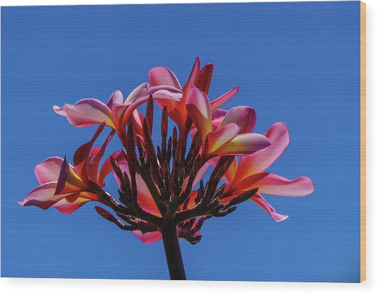 Flowers In Clear Blue Sky Wood Print