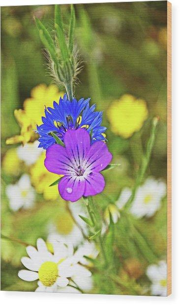 Flowers In The Meadow. Wood Print