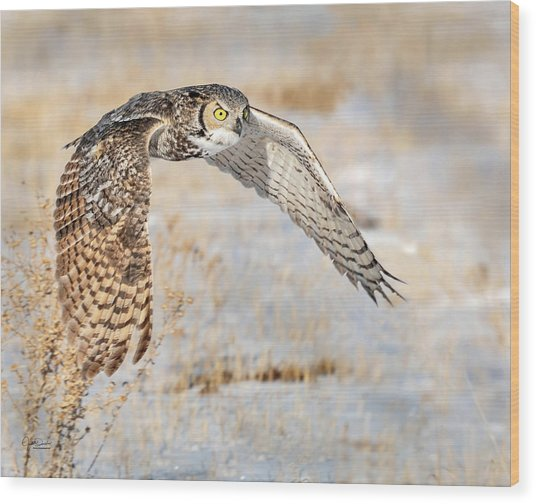Flying Great Horned Owl Wood Print