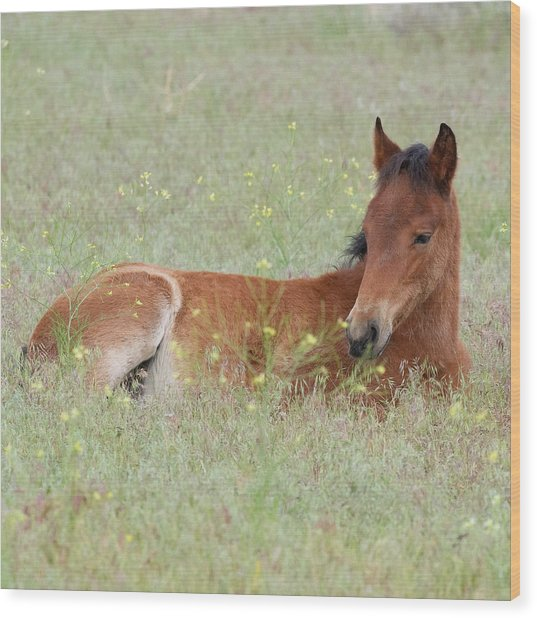 Foal In The Flowers Wood Print