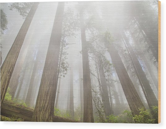 Fog In The Redwoods Wood Print