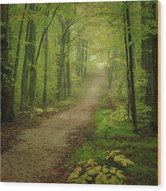 Foggy Path Wood Print