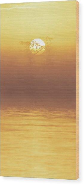 Foggy Wetlands Sunrise Wood Print