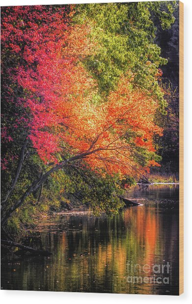 Foliage Over Forge Pond Wood Print
