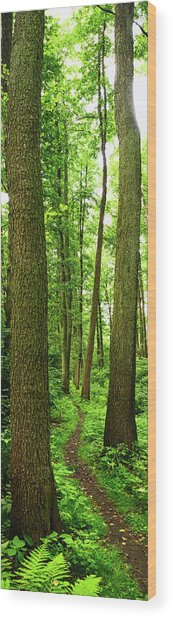 Footpath Between The Trees Wood Print by Tomchat